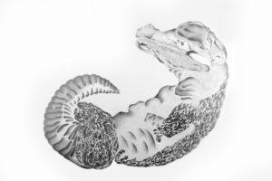 ohne Titel (Krokodilembryo), Bleistift auf Papier, 2006, 73 x 95 cm